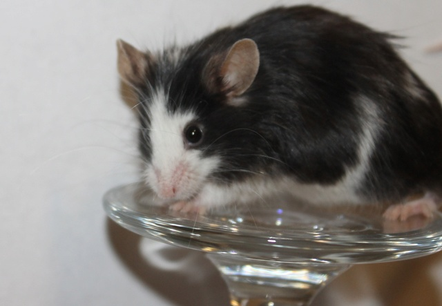 Mice on a wine glass Img_6818