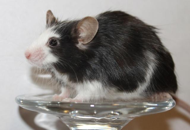 Mice on a wine glass Img_6819
