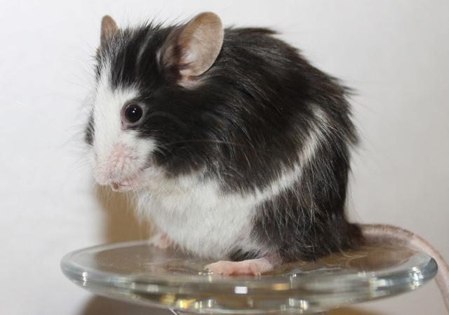 Mice on a wine glass Img_6820