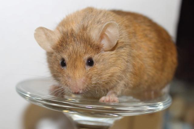 Mice on a wine glass Img_6824