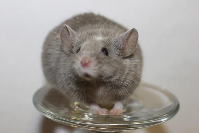Mice on a wine glass Img_6912