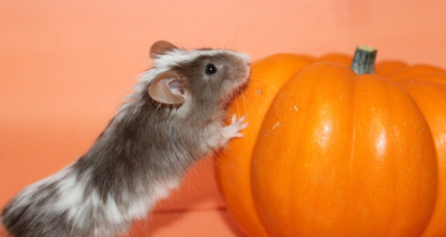 October Photo Contest  Mouse_10