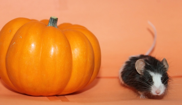 October Photo Contest  Mouse_12