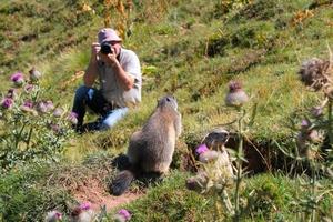 Le photographe de Dame Marmotte  Marmot11