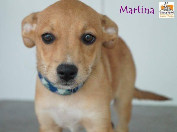 MARTINA - BEIGE - ES (Sole) 20525811