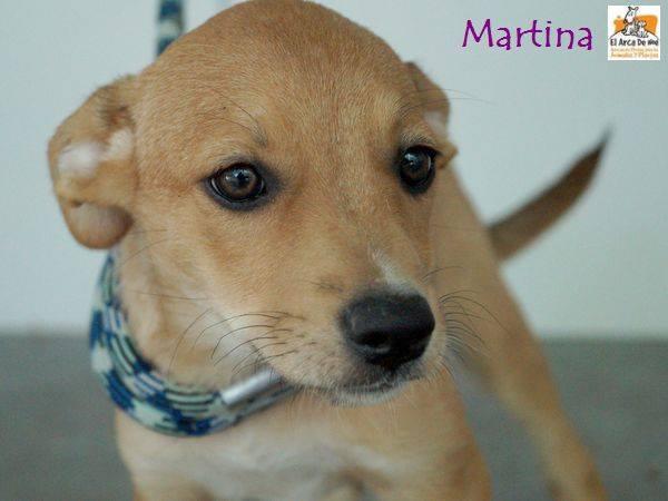 MARTINA - BEIGE - ES (Sole) 20597312