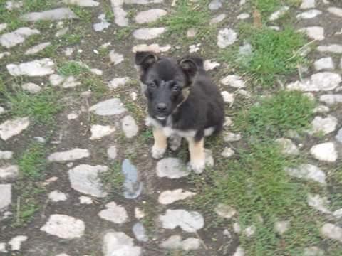 QUITO ,M-X Berger ,né 05/2017 (RUE/ ORASTIE )-SUR TERRAIN VAGUE-Adopté via Résa Refuge pas si bêtes  Fb_i2204
