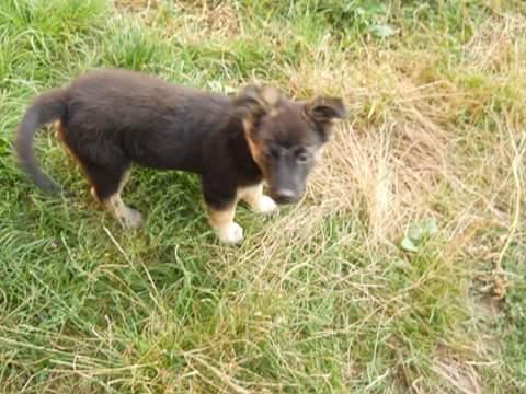 QUITO ,M-X Berger ,né 05/2017 (RUE/ ORASTIE )-SUR TERRAIN VAGUE-Adopté via Résa Refuge pas si bêtes  Fb_i2206