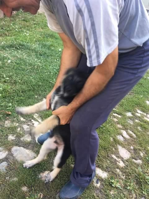 QUITO ,M-X Berger ,né 05/2017 (RUE/ ORASTIE )-SUR TERRAIN VAGUE-Adopté via Résa Refuge pas si bêtes  Fb_i2792