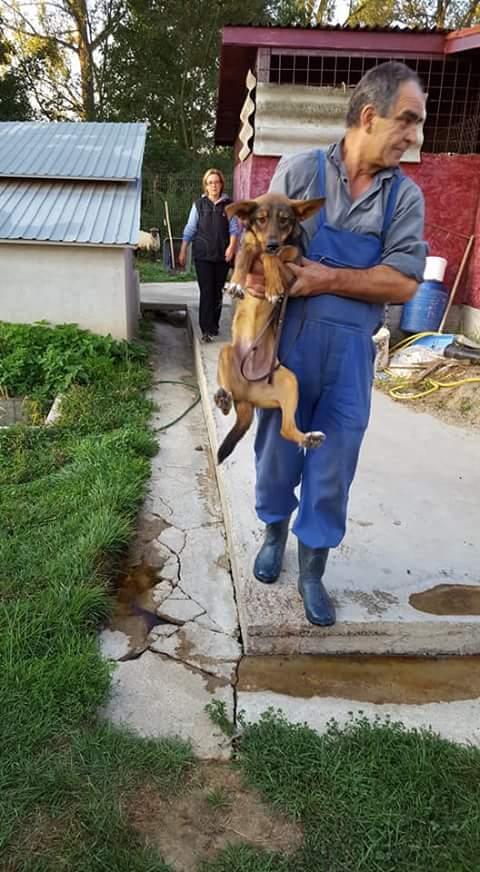 IONY MX Taille moyen 12kg , né ? -FOURRIERE ORASTIE-URGENCE EUTHA-Adopté via Refuge Pas si Bêtes- Fb_i3501