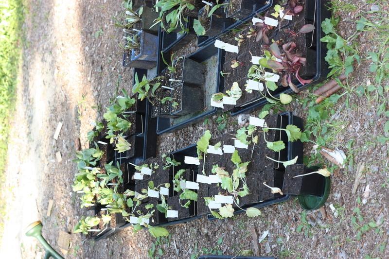Commande de plantes Barnhaven 2017 - Page 3 Img_2411