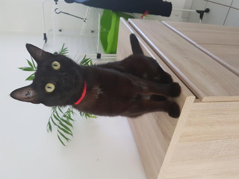 MAIKA, femelle noire, type européen, née en mai 2016 20170616