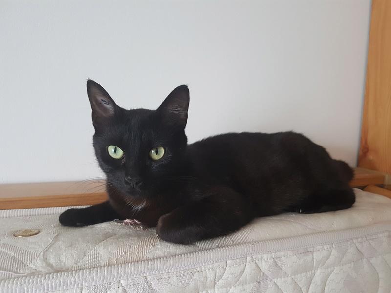 MAIKA, femelle noire, type européen, née en mai 2016 20170620