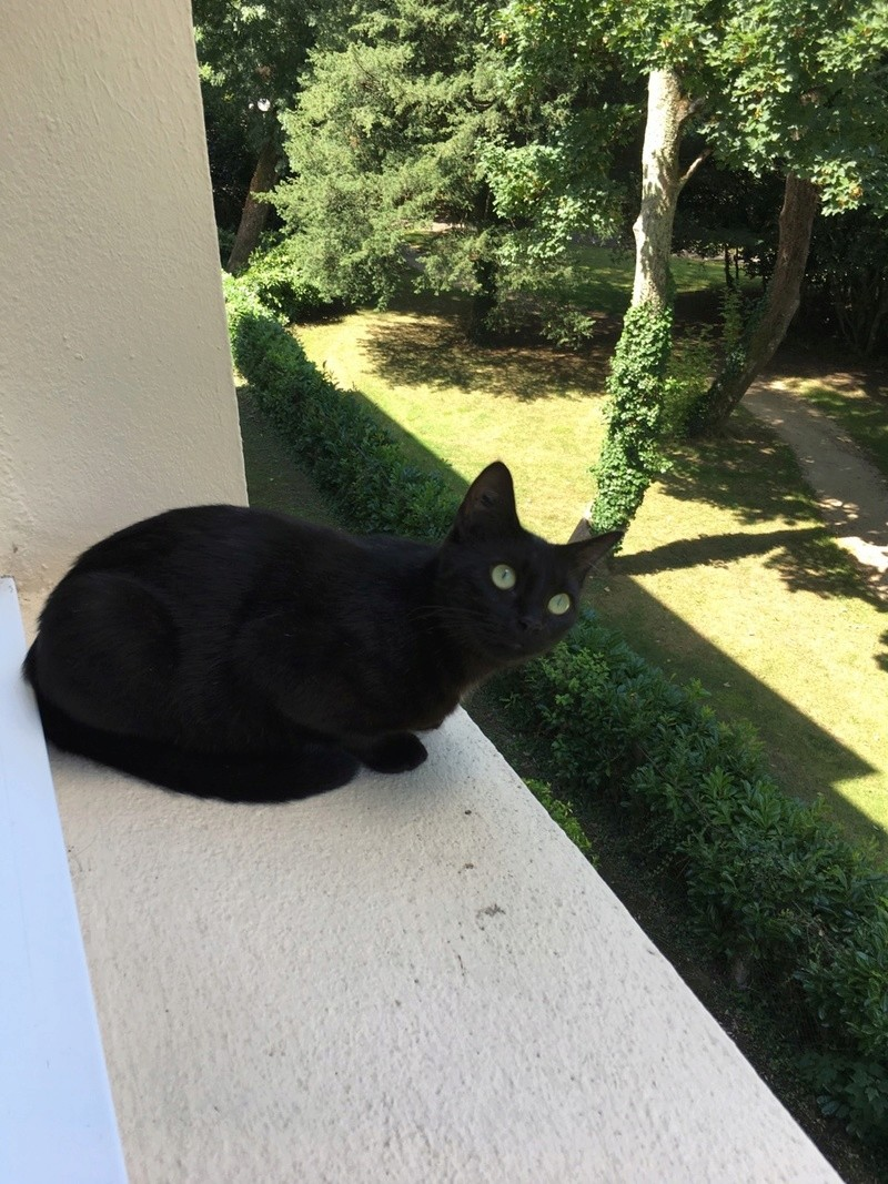 MAIKA, femelle noire, type européen, née en mai 2016 Img_0122