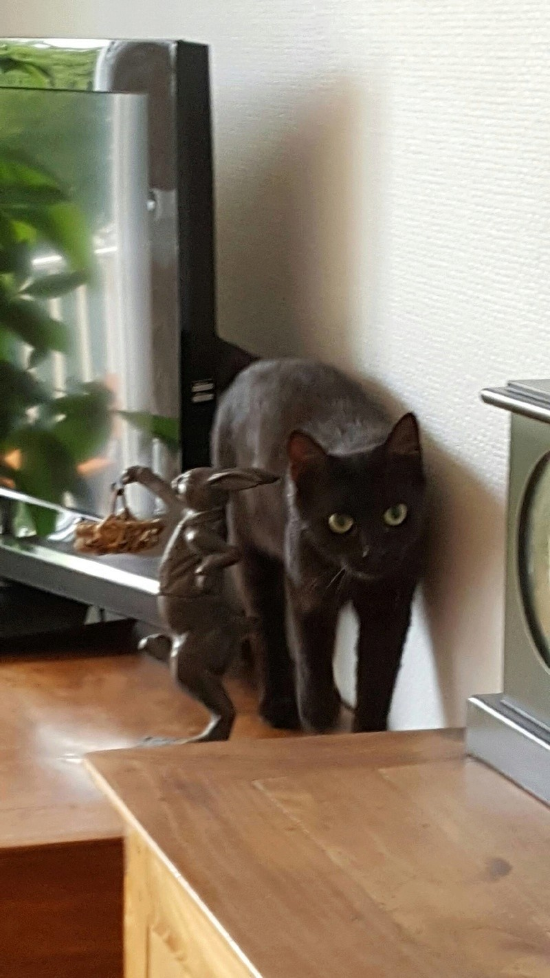MAIKA, femelle noire, type européen, née en mai 2016 Img_9610