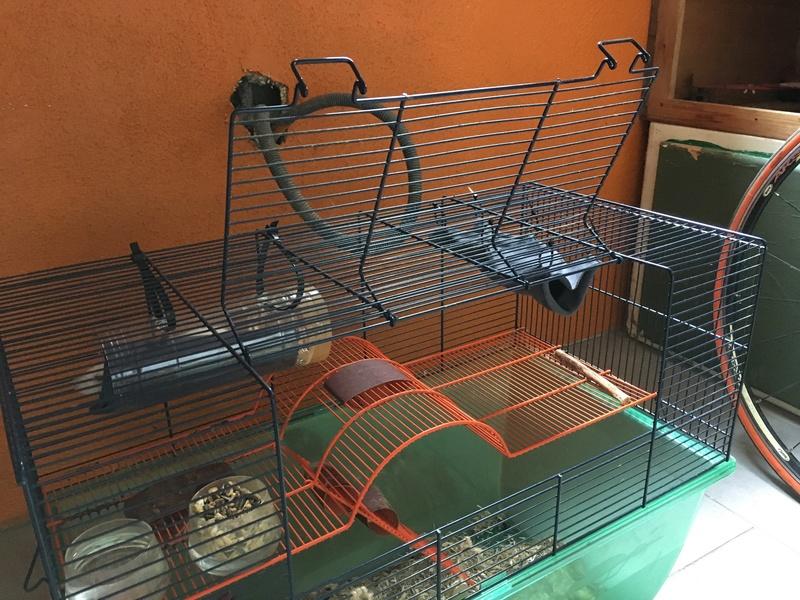 Des idées pour agrandir une cage ? Img_2510