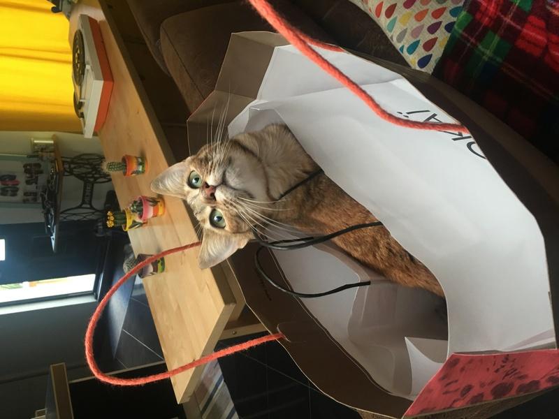 margotte - MARGOTTE, chatonne tigrée et rousse, née le 05.04.16 Img_5211