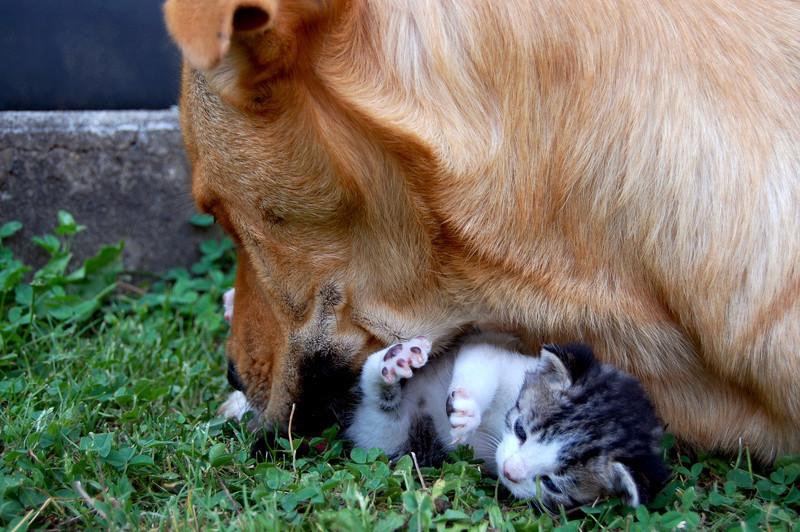 Cohabitation chien et chats - Page 19 Dsc_0026