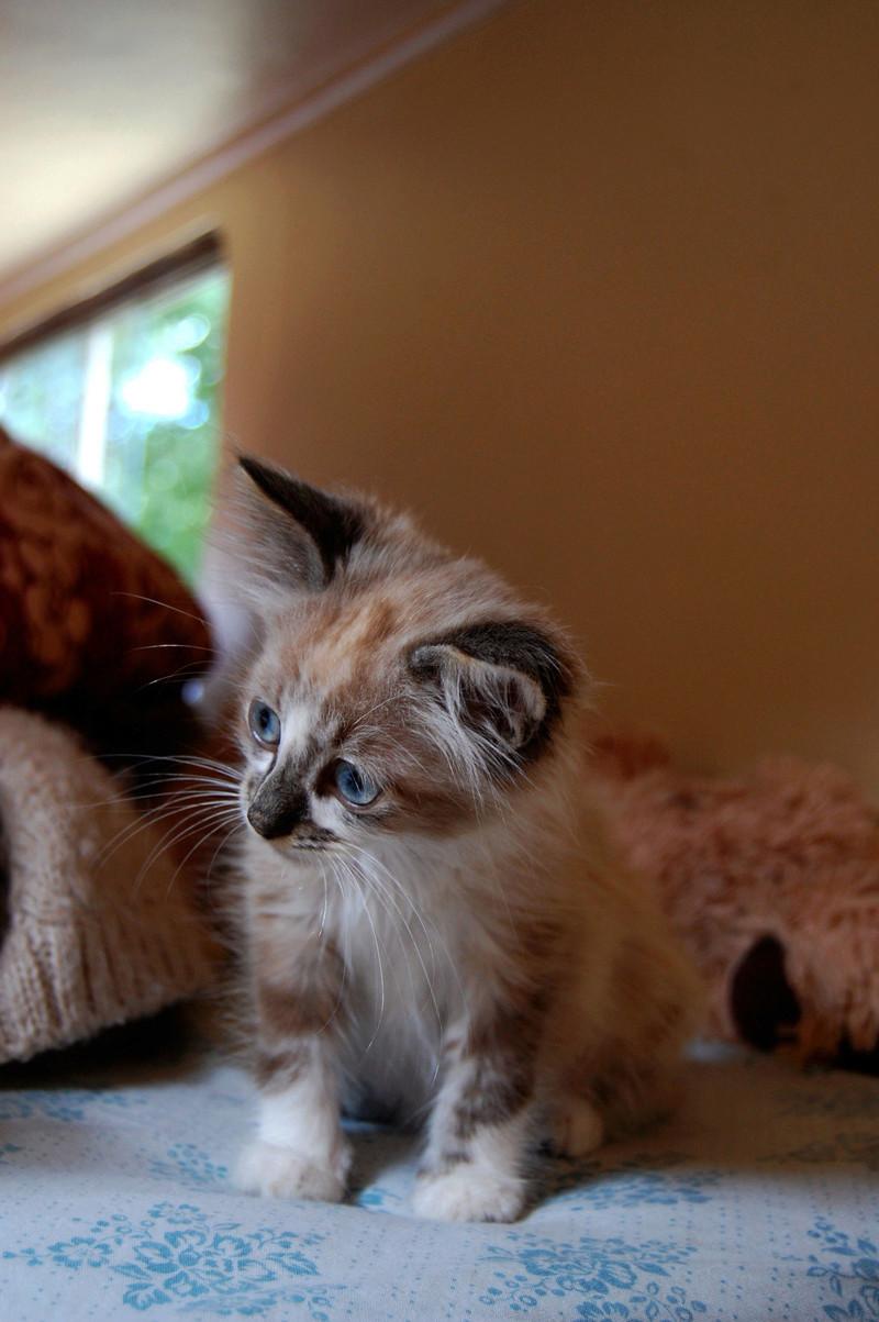 Hinsmi, chaton tout doux ADOPTÉ Dsc_0432