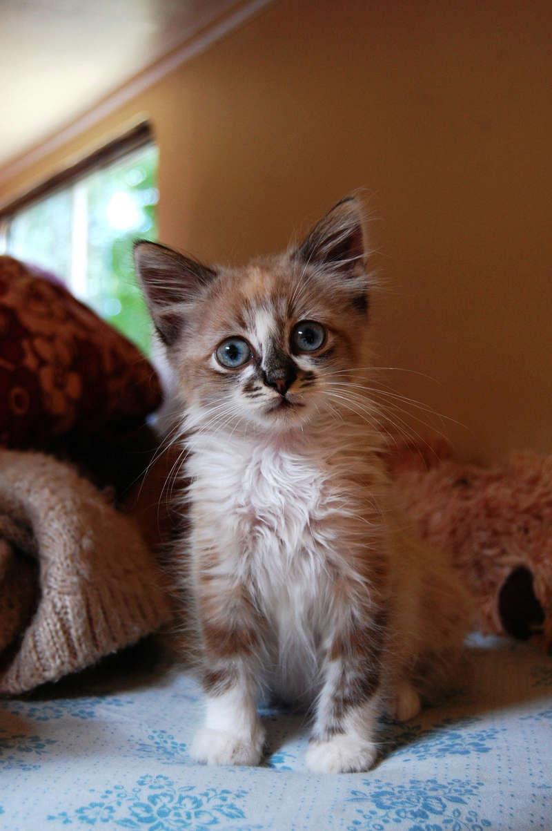 Hinsmi, chaton tout doux ADOPTÉ Dsc_0434