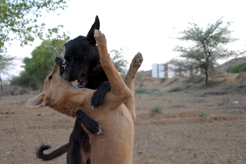 Mithai, chienne rapatriée d'Inde ADOPTÉE Img_0110