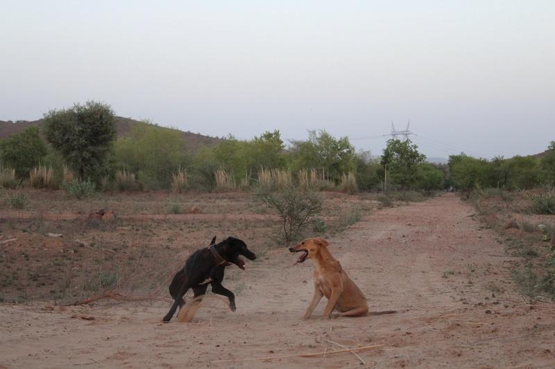 Mithai, chienne rapatriée d'Inde ADOPTÉE Img_0111