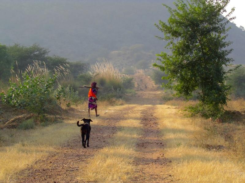 Mithai, chienne rapatriée d'Inde ADOPTÉE Img_0410