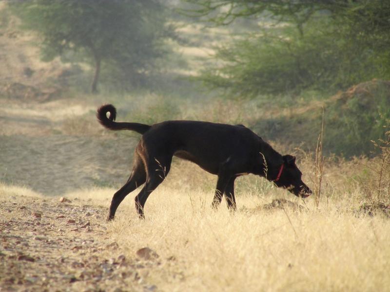 Mithai, chienne rapatriée d'Inde ADOPTÉE Img_0411