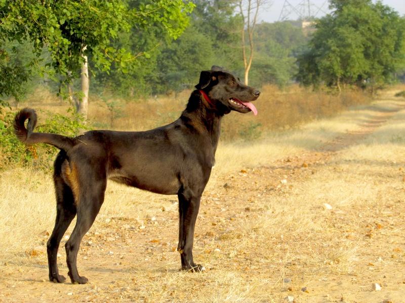 Mithai, chienne rapatriée d'Inde ADOPTÉE Img_0511