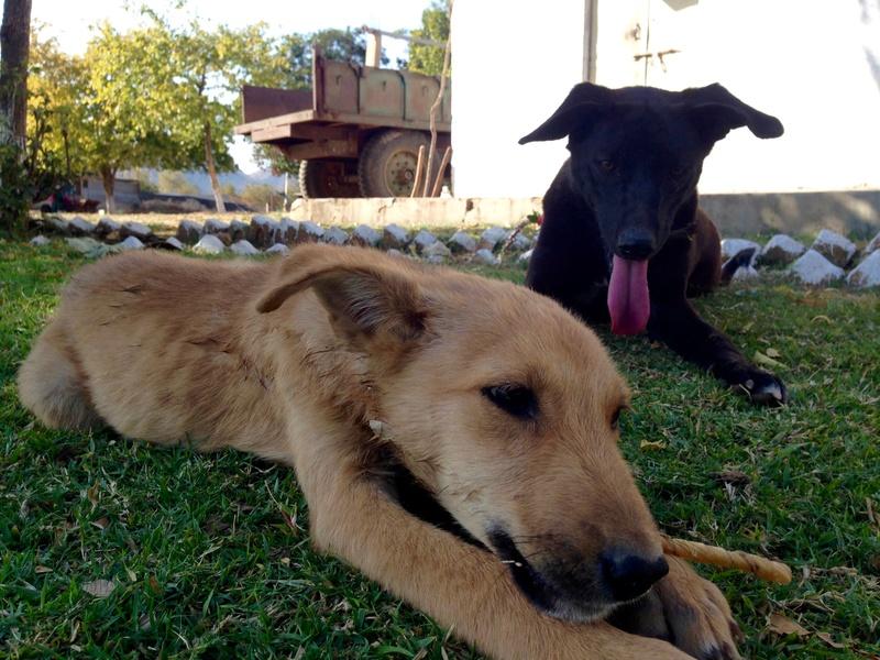 Mithai, chienne rapatriée d'Inde ADOPTÉE Img_6710