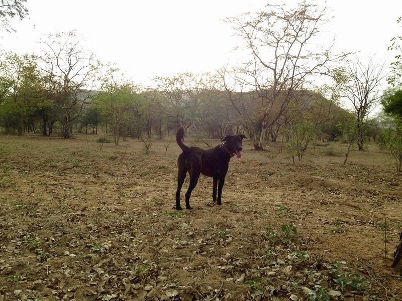 Mithai, chienne rapatriée d'Inde ADOPTÉE Img_6910