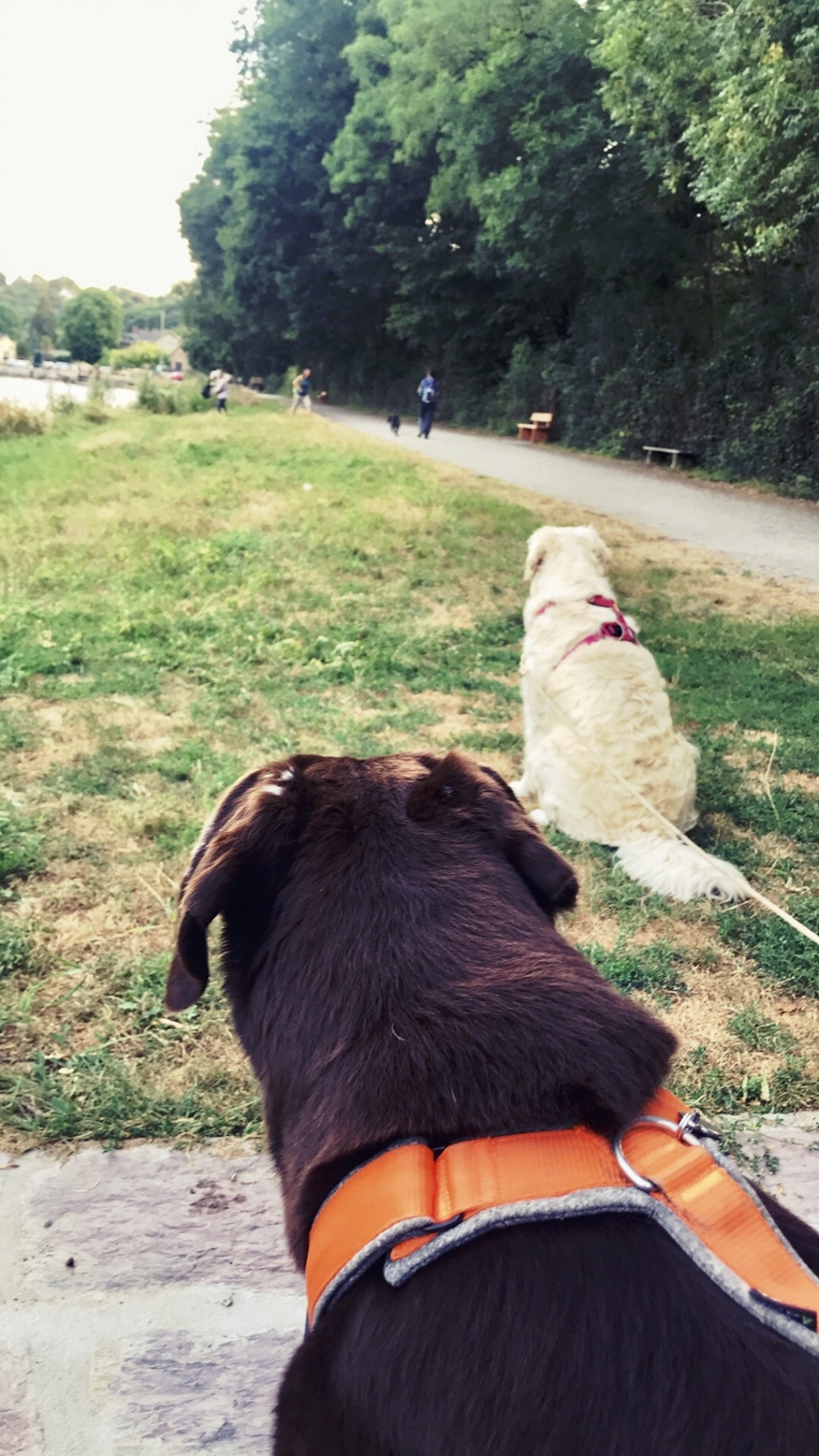 Education du chien de compagnie.fr - Page 4 Img_4810