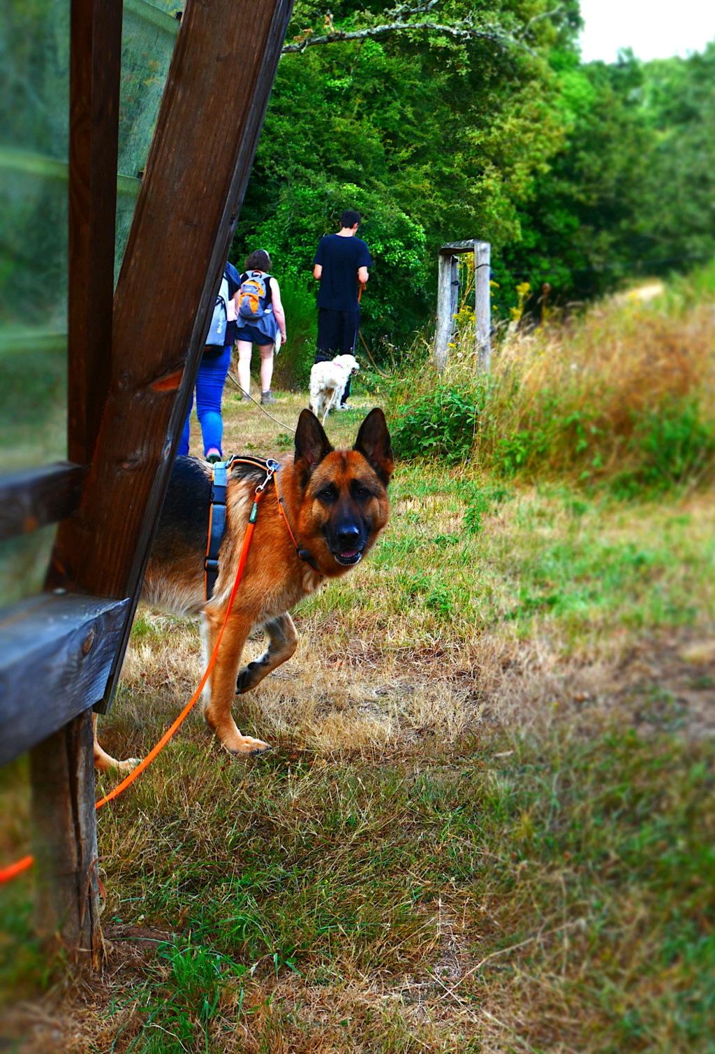 Education du chien de compagnie.fr - Page 4 P1050810