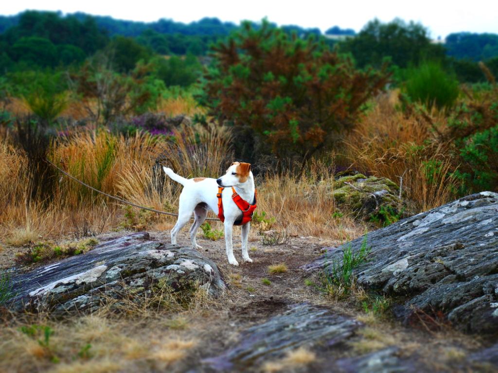 Education du chien de compagnie.fr - Page 4 P1050822