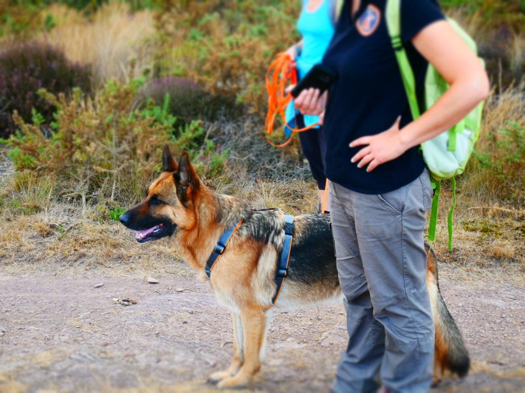 Education du chien de compagnie.fr - Page 4 P1050824
