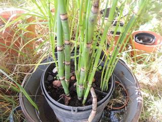 Les plantes des ami(e)s - Page 4 Dscn6417