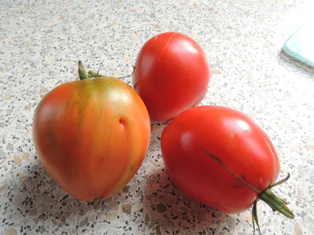 Une tomate, mais laquelle ?? Dscn7112