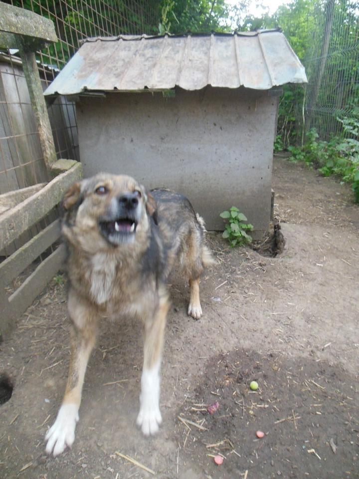 TIPPI - Très jolie femelle X berger poils mi-longs - née en 2009 - parrainée par Edni94 - R-SC- SOS - Page 3 19247811