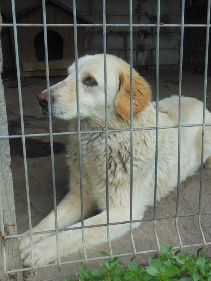 BALANUCH, mâle croisé berger sauvé de Pallady, né en 2009 parrainé par Nathalie G. -Gage Coeur  Myri_Bonnie-SC-R-SOS- 19260511