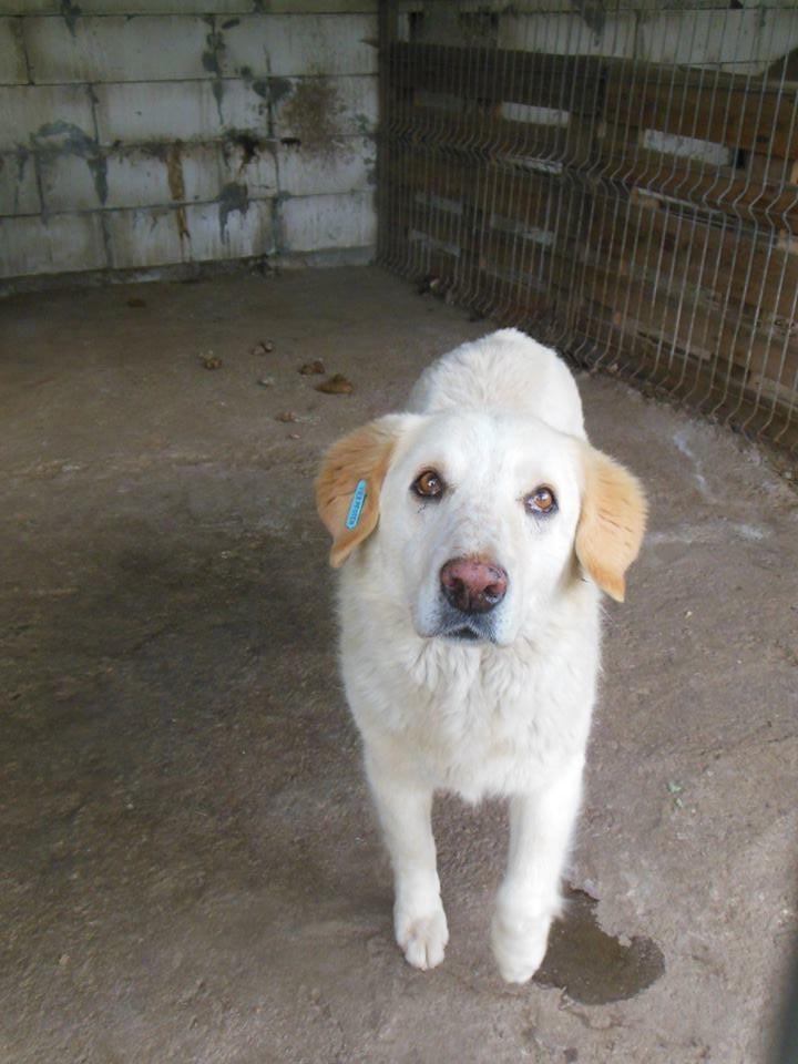 BALANUCH, mâle croisé berger sauvé de Pallady, né en 2009 parrainé par Nathalie G. -Gage Coeur  Myri_Bonnie-SC-R-SOS- 19396712