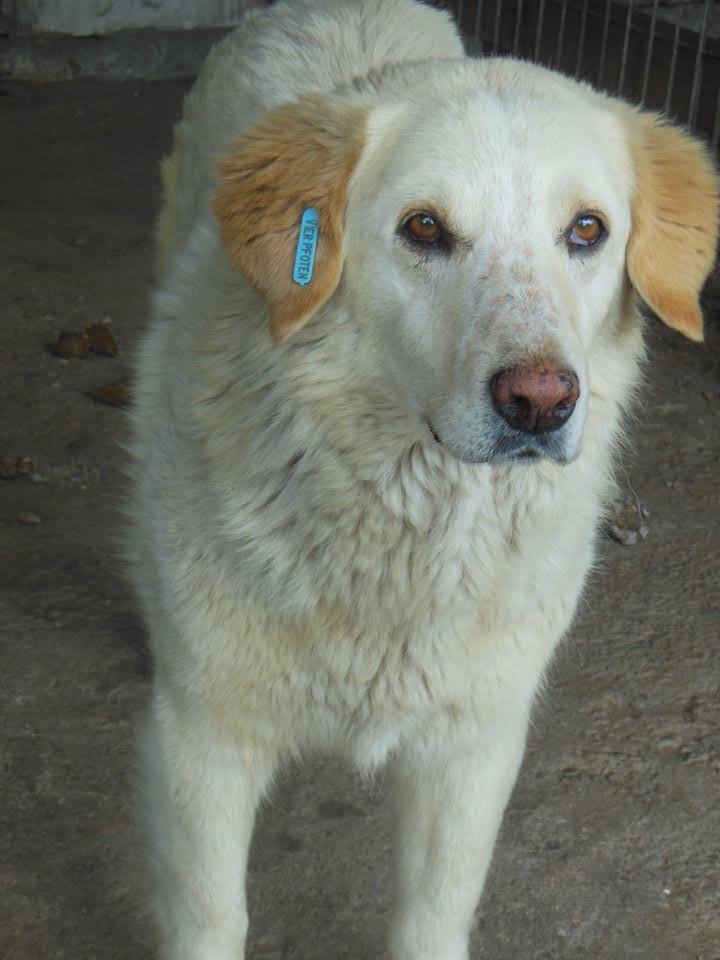 BALANUCH, mâle croisé berger sauvé de Pallady, né en 2009 parrainé par Nathalie G. -Gage Coeur  Myri_Bonnie-SC-R-SOS- 19396713