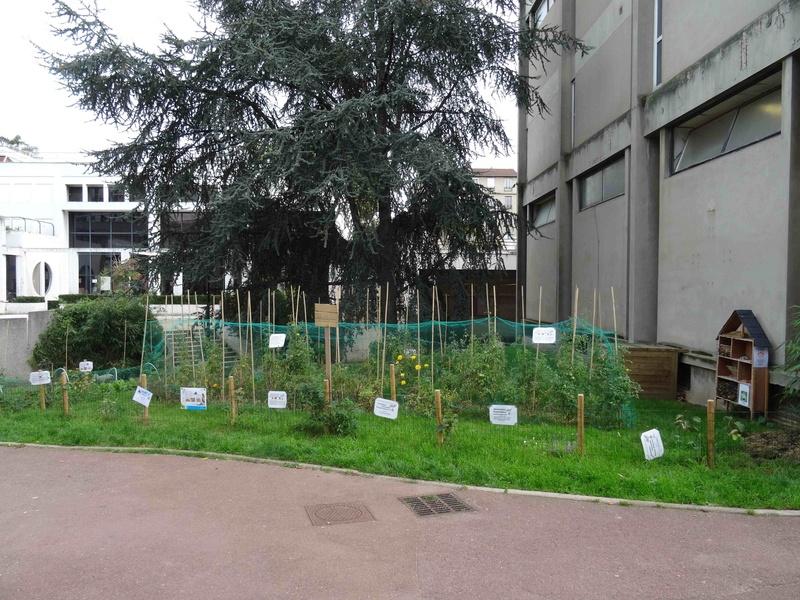 Incroyables Comestibles de Boulogne Billancourt  Dsc04017