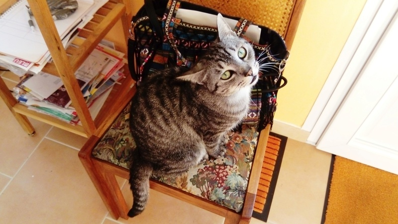 loula - LOULA, chatte européenne tigrée grise, née en Juillet 2015 Demand10