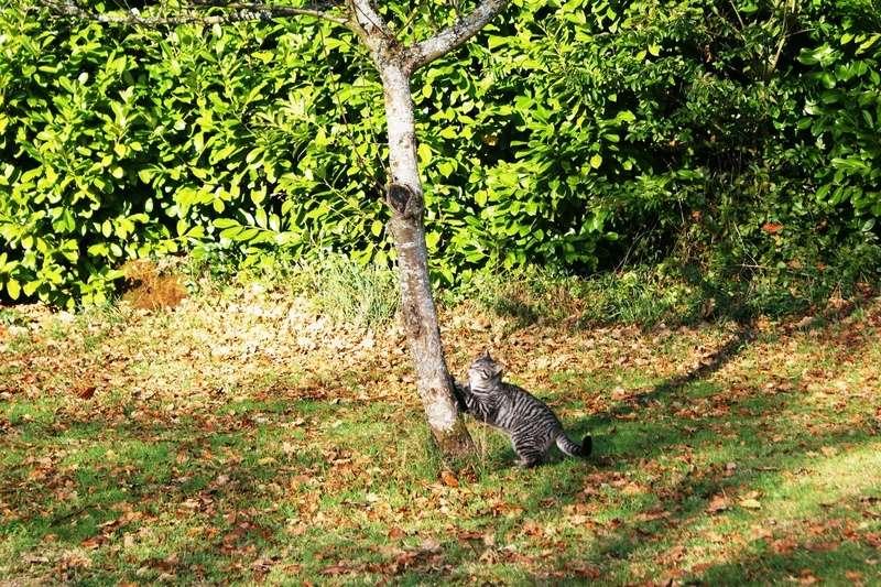 loula - LOULA, chatte européenne tigrée grise, née en Juillet 2015 Faire_10