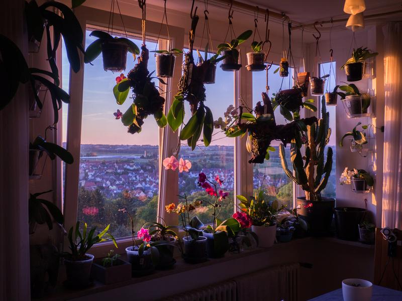 die Photosynthese = Ernährung der Pflanzen? P6180011
