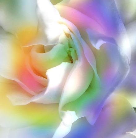 Pour la venue de l'Amour dans le monde, rendez-vous tous les dimanches soir 20 heures.  - Page 24 Rose10