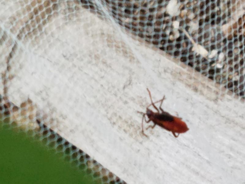 Bug Identification  20170620