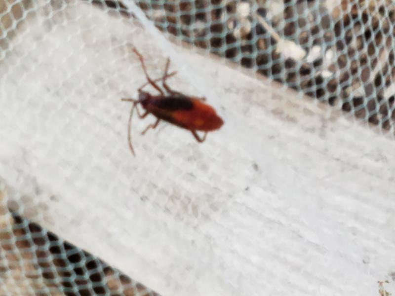 Bug Identification  20170621