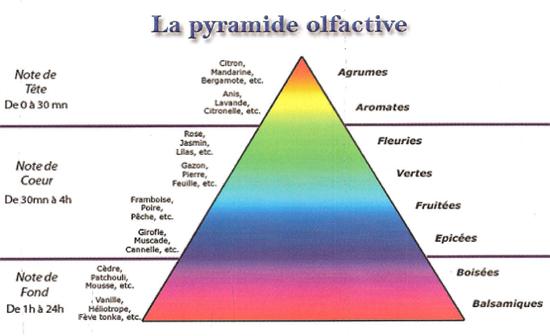 La pyramide olfactive - Notes de tête, de cœur et de fond Pyrami10