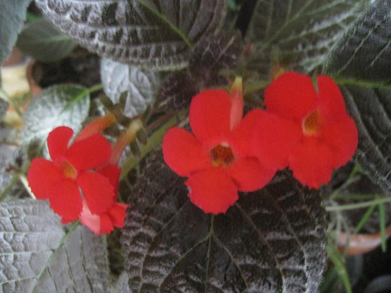 diverses fleurs - Page 2 00811